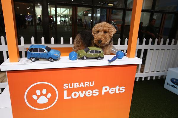 Subaru помогает спасать жизни животных