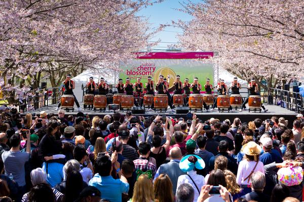 Subaru – главный спонсор Фестиваля цветения вишни
