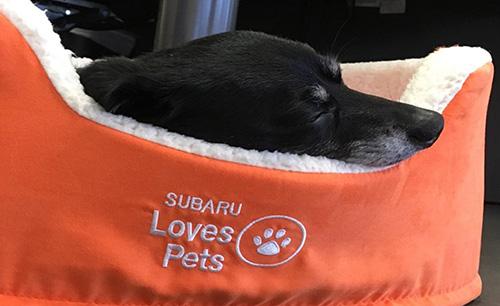 Субару проводит акцию помощи домашним животным